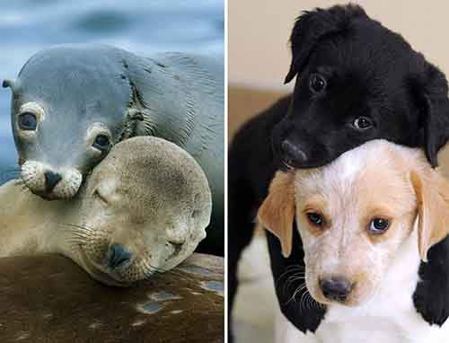 funny-seals-look-like-dogs-26-574da00bb91a5__880