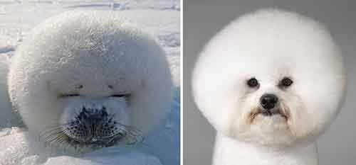 funny-seals-look-like-dogs-40-574d9b041f2dc__880