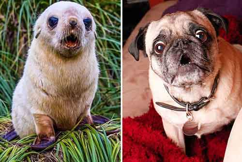 seals-look-like-dogs-3-574d4edccd091__880