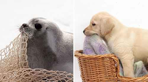 seals-look-like-dogs-9-574d587db3ffa__880