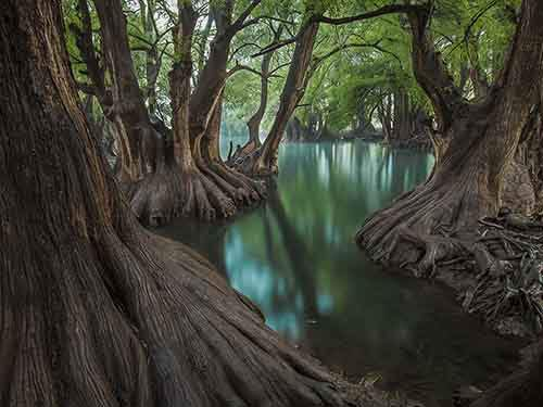 lake-camecuaro-cypress_95339_990x742