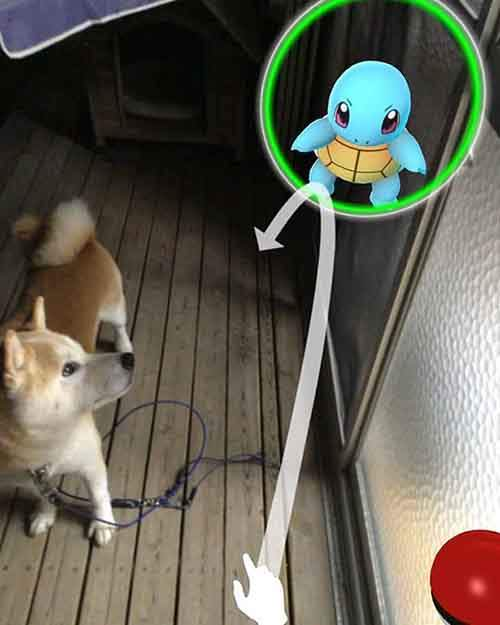 pets-can-see-pokemon-go-japan-10-57961c488c1f5__605