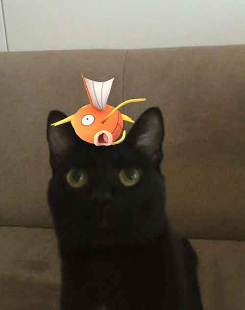 pets-can-see-pokemon-go-japan-12-57961ffd633c9__605
