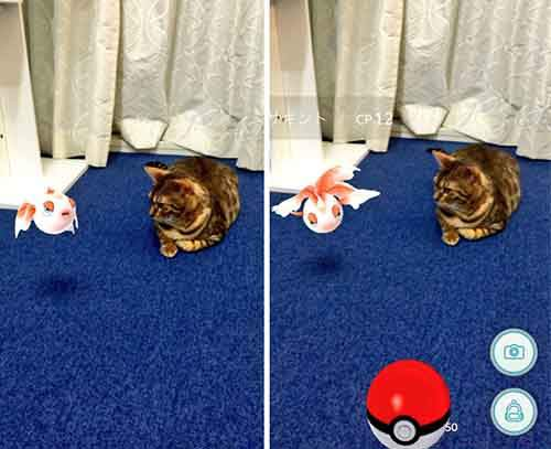 pets-can-see-pokemon-go-japan-2-57961c30d210c__605