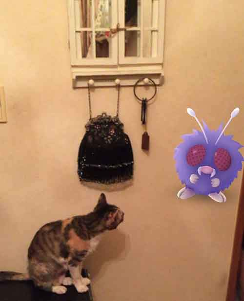 pets-can-see-pokemon-go-japan-24-579622ccdff8c__605