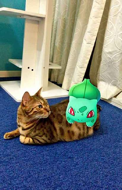 pets-can-see-pokemon-go-japan-26-57962348c6aaa__605