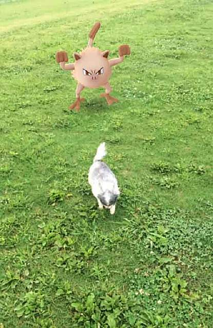 pets-can-see-pokemon-go-japan-27-5796239d9e45d__605