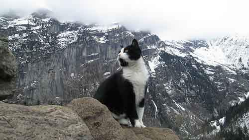 cat-guide-man-mountain