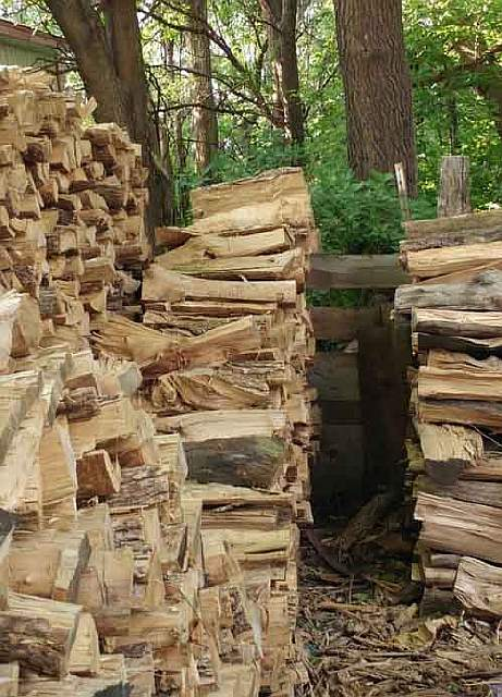 hidden-cat-wood-pile-logs-1