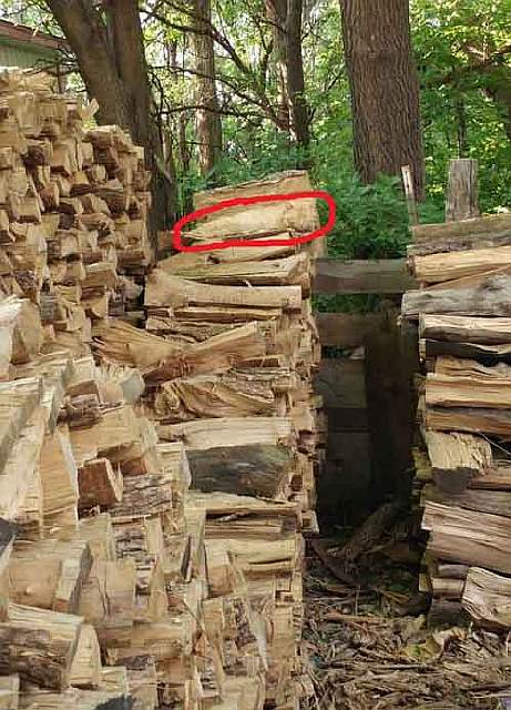 hidden-cat-wood-pile-logs-2