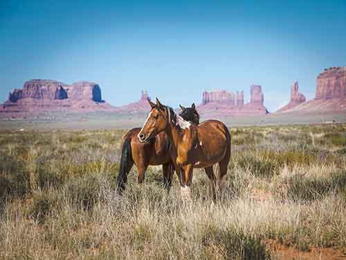 monument-valley-horses_95363_990x742
