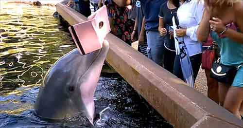 seaworld-dolphin-steals-ipad-is-sick-of-your-photos