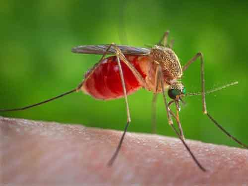 1-mosquitoes-750000-deaths-a-year