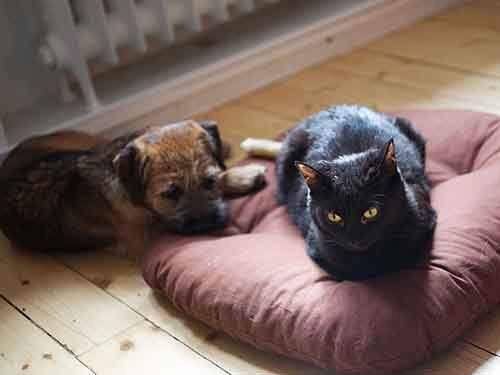 cats-stealing-dog-beds-101-57e13d740d91a__700
