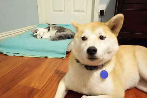 cats-stealing-dog-beds-1-57e0fd99f353a__700