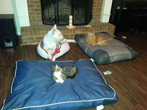 cats-stealing-dog-beds-19-57e0fdbd39be3__700