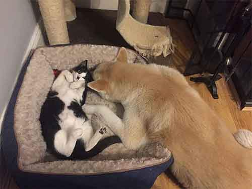 cats-stealing-dog-beds-28-57e100c2be931__700
