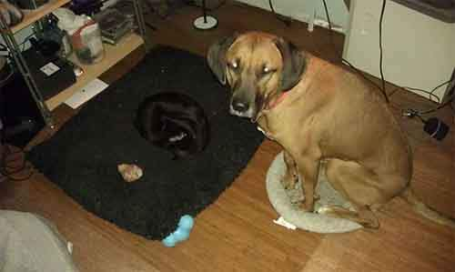 cats-stealing-dog-beds-32-57e1038da060a__700
