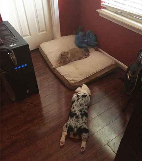 cats-stealing-dog-beds-33-57e104924fc23__700