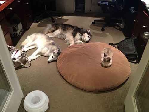 cats-stealing-dog-beds-4-57e0fda2433f8__700