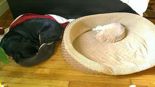 cats-stealing-dog-beds-43-57e11cbd7790e__700