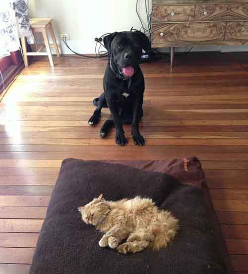 cats-stealing-dog-beds-45-57e11cfa9cd17__700