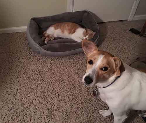 cats-stealing-dog-beds-5-57e0fda443791__700