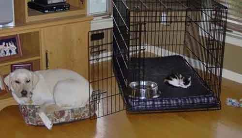 cats-stealing-dog-beds-53-57e12928f254d__700