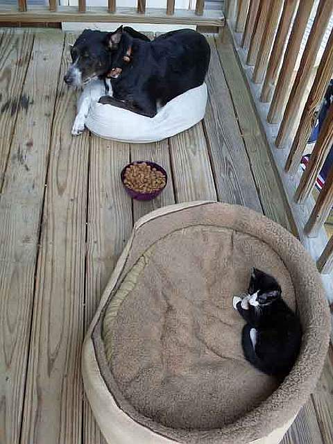 cats-stealing-dog-beds-59-57e12cd502223__700