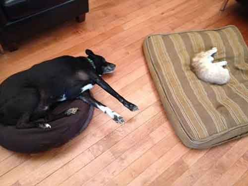 cats-stealing-dog-beds-8-57e0fda95b818__700