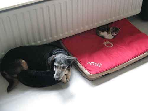 cats-stealing-dog-beds-81-57e14b0dd5a4c__700