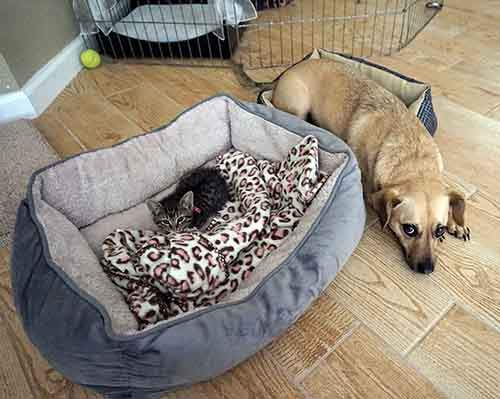 cats-stealing-dog-beds-83-57e14c4f0b7ad__700