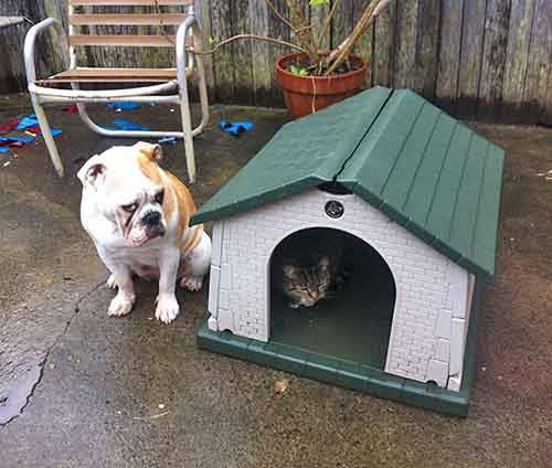 cats-stealing-dog-beds-84-57e14d067e84d__700