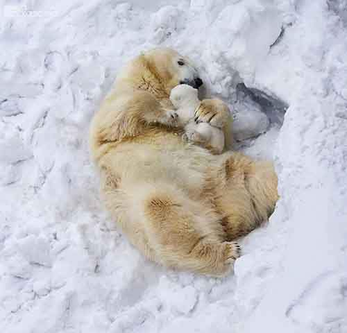 mother-bear-cubs-animal-parenting-10-57e3a1f5e5baf__880