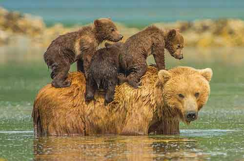 A mother bear