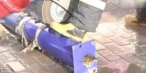 38e0b6f900000578-3811506-firefighters_decided_to_use_an_electric_saw_to_cut_the_pipe_wate-m-29_1475066018776