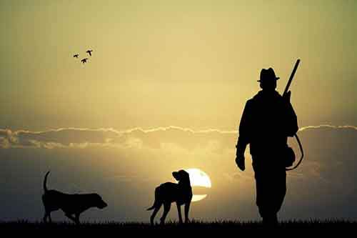 animals-dog-bird-sun-men-hunting-gun-rifles-2k-wallpaper-middle-size