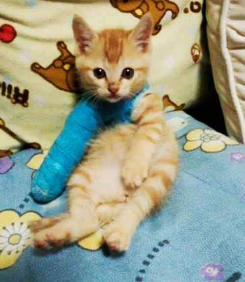animals-in-tiny-casts-12-580093b3d5f38__605
