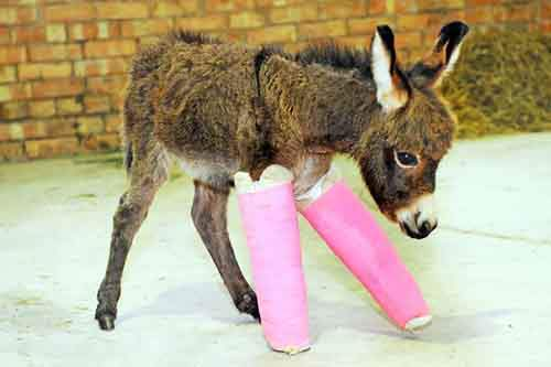 animals-in-tiny-casts-19-580093cdd2411__605