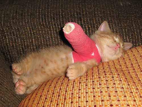 animals-in-tiny-casts-2-5800938e28fb0__605