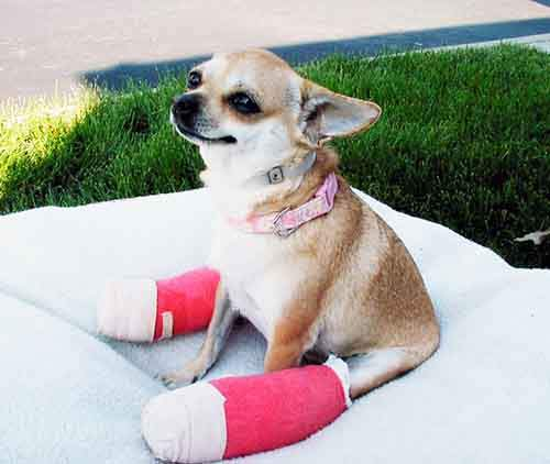 animals-in-tiny-casts-28-580093eb0092b__605