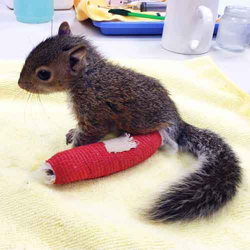 animals-in-tiny-casts-5-580093968a038__605