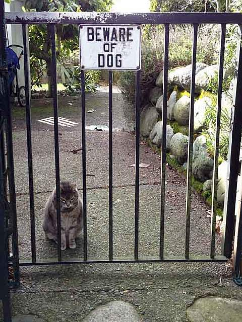 beware-of-the-dog-16-57ee5ad761857__605