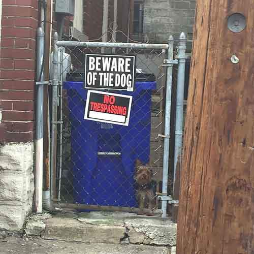 beware-of-the-dog-2-57ee55770ead6__605