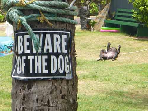 beware-of-the-dog-8-57ee55d977d4a__605