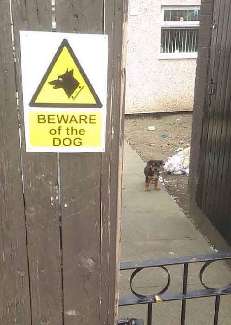 beware-of-the-dog-9-57ee55e6ba3dc__605