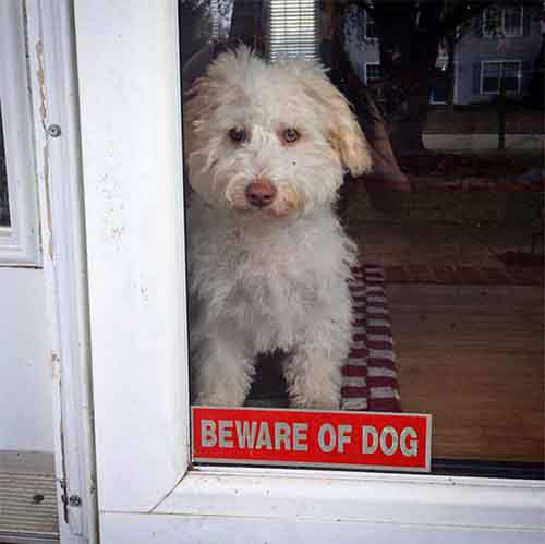 beware-of-the-dog-signs-28-57ee688b06198__605
