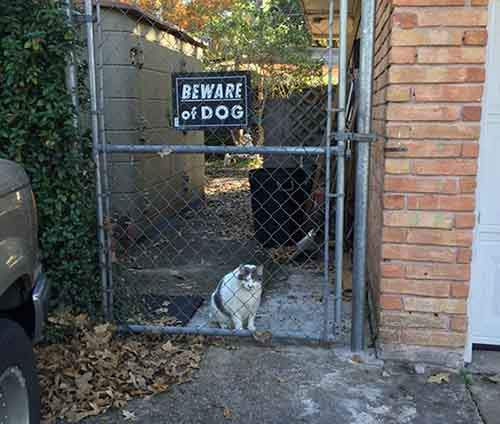 beware-of-the-dog-signs-31-57ee6b5bb9e14__605