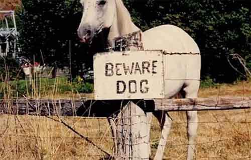 beware-of-the-dog-signs-33-57ee6b8bf0ed5__605