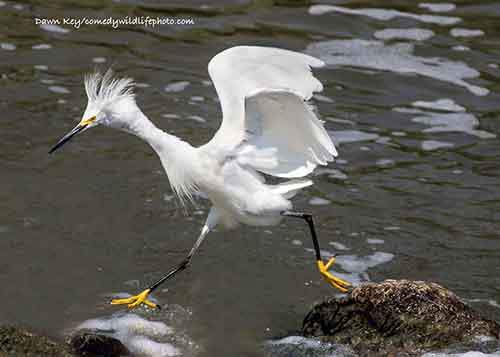 comedy-wildlife-photography-awards-2016-10-57f103afcf728__880